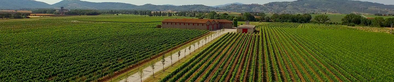 Lamborghini terroir wijn Italië wijnboxen