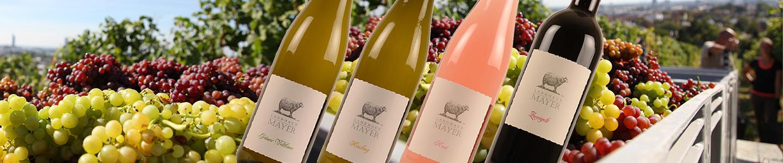 Mayer wijnen Grüner Veltliner, Riesling, Zweigelt Rosé Zweigelt Rot