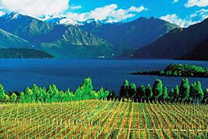 Nieuw-Zeeland wijnen