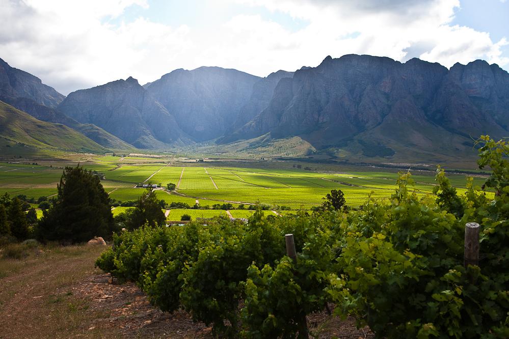 Slanghoek landschape